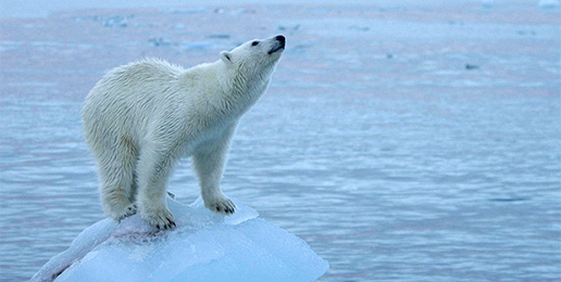 Global Warming: Policy Hoax versus Dodgy Science