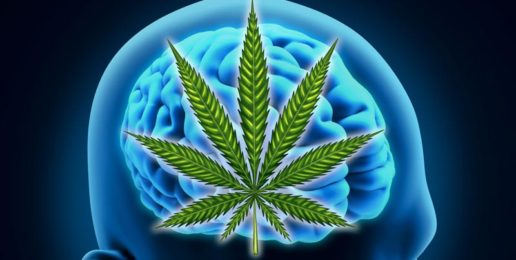 Bad to the Brain: Marijuana's Effects on Adolescents