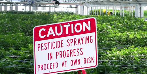 Insult and Injury: The Problem of Pot and Pesticides