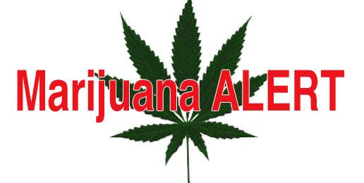 Marijuana Alert