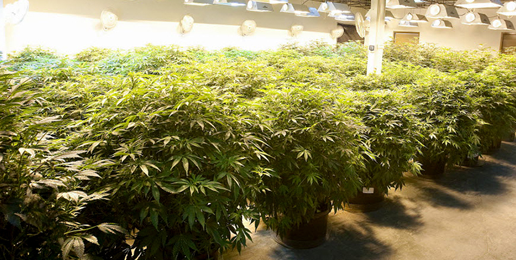 State's Attorney Kenneally Explains His Opposition to Legal Weed in Illinois