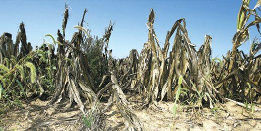 Global Warming Crop Apocalypse Is Just Media Fear-Mongering