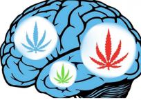 Marijuana, Mental Illness and Violence